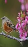 Bird Flowers Live Wallpaper screenshot 2/3