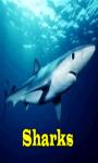 Sharks Lite  screenshot 1/3