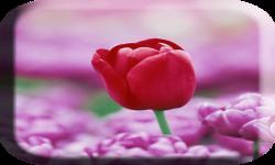 Pink flower wallpaper photo screenshot 3/4