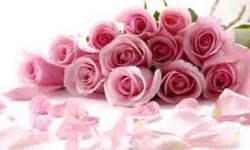 Pink flower wallpaper photo screenshot 4/4