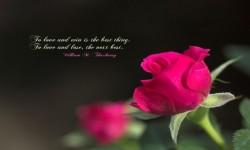 Love Shayri SMS screenshot 4/4