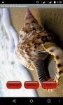 Sea Shell Wallpapper Lite screenshot 2/4