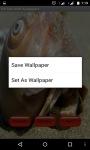 Sea Shell Wallpapper Lite screenshot 4/4