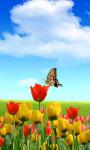 Butterfly Wallpaper_1 screenshot 1/4