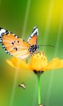 Butterfly Wallpaper_1 screenshot 3/4