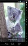 Quiet Koala Live Wallpaper screenshot 1/2