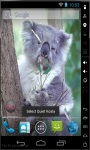 Quiet Koala Live Wallpaper screenshot 2/2