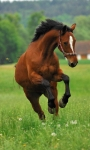 Horses my passion screenshot 1/3