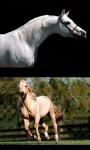 Horses my passion screenshot 2/3