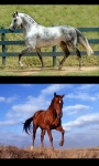 Horses my passion screenshot 3/3