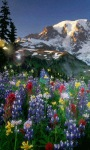 Magical Land Live Wallpaper screenshot 3/3