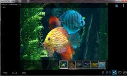 Beautiful Color Fish Wallpaper screenshot 1/6