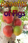 Benefits of Figs screenshot 1/4