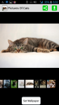 Pictures Of Cats And Kittens screenshot 1/4