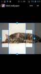 Pictures Of Cats And Kittens screenshot 3/4