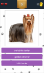 Dog Breeds App Quiz screenshot 3/5