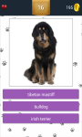 Dog Breeds App Quiz screenshot 4/5