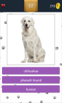 Dog Breeds App Quiz screenshot 5/5