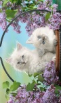 Cute Pet Cat Wallpaper screenshot 2/2