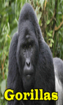 Gorillas Lite  screenshot 1/3