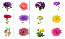 Aster Flowers Onet Classic Game screenshot 1/3