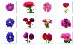 Aster Flowers Onet Classic Game screenshot 2/3