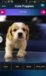Free Cute Puppies Wallpapers screenshot 3/3