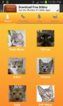 Cat Meow Sounds Free screenshot 1/1