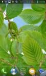Green branches screenshot 3/3