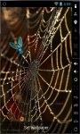 Golden Spider Web Live Wallpaper screenshot 1/2