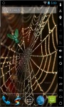 Golden Spider Web Live Wallpaper screenshot 2/2