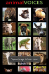 Animal Voices screenshot 2/4