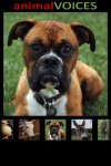 Animal Voices screenshot 3/4