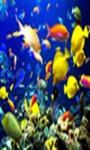 beautiful fish wallpaper HD1 screenshot 1/6