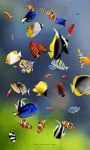 beautiful fish wallpaper HD1 screenshot 2/6