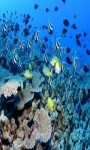 beautiful fish wallpaper HD1 screenshot 3/6