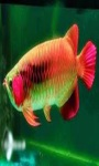 beautiful fish wallpaper HD1 screenshot 5/6