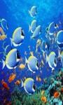 beautiful fish wallpaper HD1 screenshot 6/6