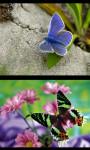 Best Butterfly Gallery screenshot 1/4