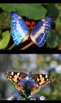 Best Butterfly Gallery screenshot 4/4