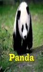 Panda Free screenshot 1/3