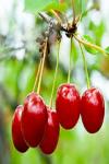 Natural Healthy Summer Foods screenshot 2/4