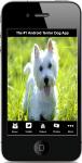 Types Of Terrier Dogs screenshot 1/4
