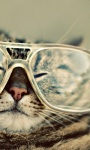 Funny Cat styles Pictures  screenshot 1/6
