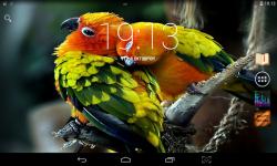 Colorful Parrots Live screenshot 1/4