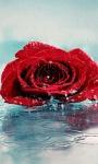 Red Rose Live Wallpape screenshot 1/3