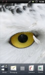 Awesome White Owl Live Wallpaper screenshot 1/3