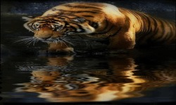 Tiger Mirror Live Wallpaper screenshot 2/3