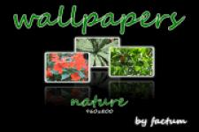 wallpapers nature 960x800 screenshot 1/1