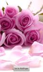 Free Rose wallpapers screenshot 3/5